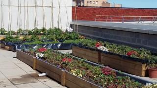 Foto coberta experimental edifici Merce Rodoreda de la UPF
