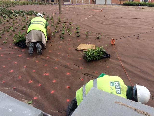 Jardiners del TEB Verd treballant en les obres de rehabilitació dels jardins de Can Mantega.